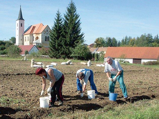 Pole u Blažejova se o víkendu jen hemžilo sběrači brambor, kterým navíc přálo pěkné počasí. Řada lidí využívá možnosti samosběru, neboť brambory tak pořídí levněji.