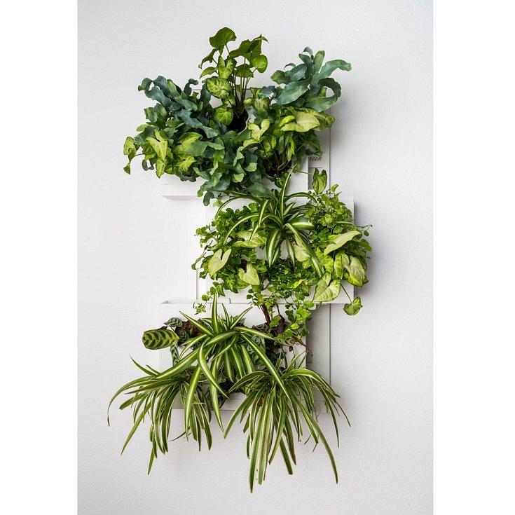 Méně nákladnou a dostupnější alternativou k vertikálním zeleným stěnám jsou obrazy z živých rostlin.