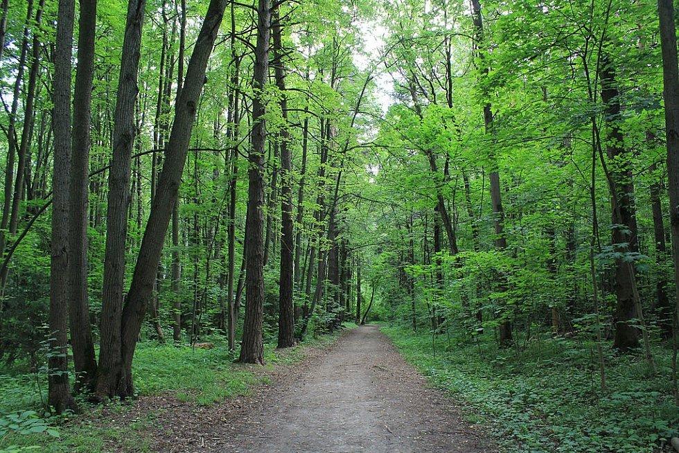 Rozlohou i vegetací připomíná Bitcevskij park spíše les