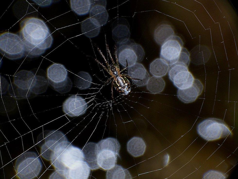 Pavouci se při kontaktu s okolním světem hodně spoléhají na dotek. Jejich těla a nohy jsou pokryty drobnými chloupky, rozlišujícími různé druhy vibrací