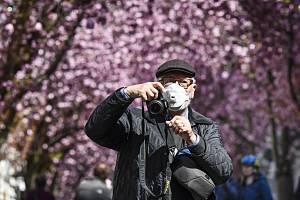 Muž s respirátorem v Bonnu pod kvetoucími třešněmi v německém Bonnu 5. dubna 2020