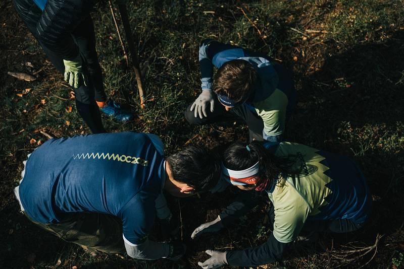 Přípravy na šampionát probíhají na všech úrovních - organizátoři dokonce vyrazili sázet stromky