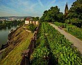 vinice Starého purkrabství