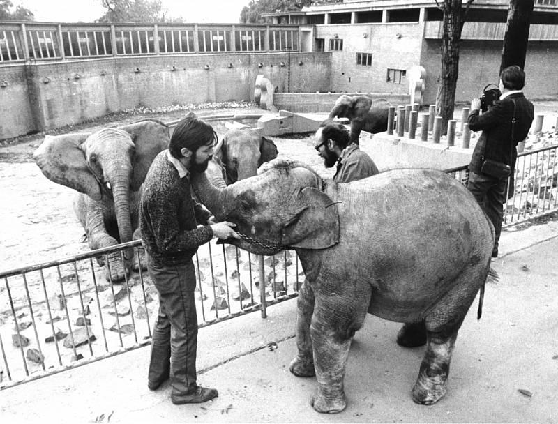 Slůně Shanti poprvé u slonů v pražské zoo, předání od FSB Barrandov