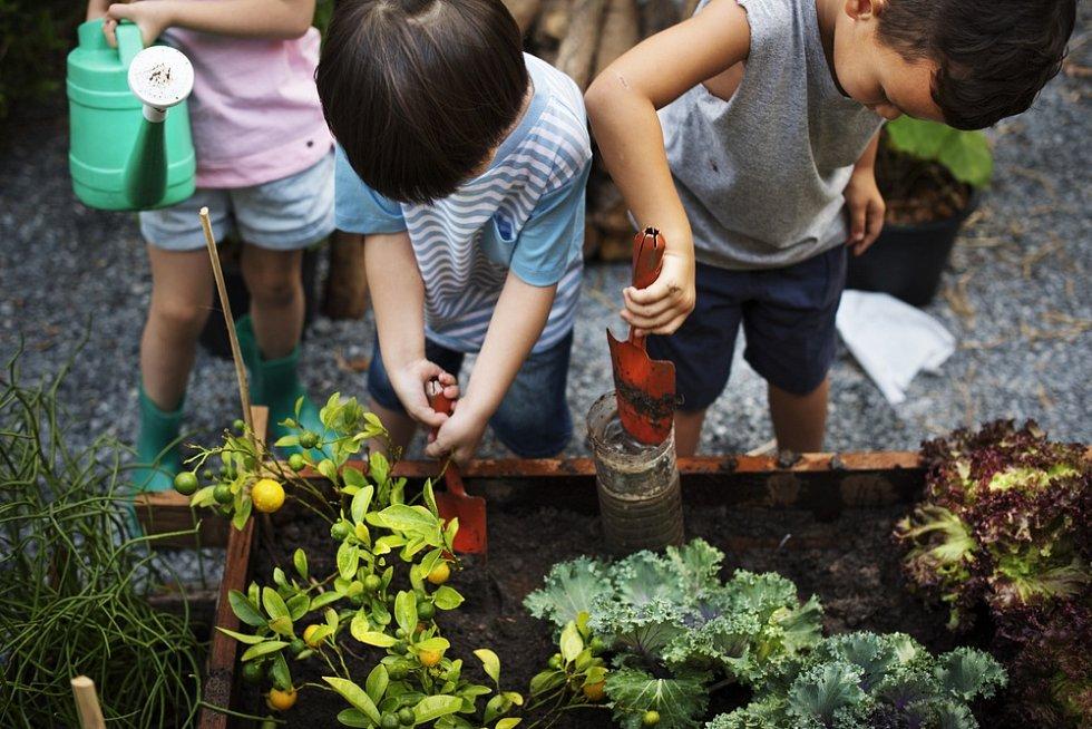 Zvolte rostliny volně plovoucí po hladině, malí pěstitelé pak nebudou potřebovat žádný substrát ani nádobky pro jejich zasazení.