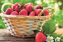 PLODY. Ideální na balkon jsou měsíční jahody. Větší plody mají odrůdy Rujana a Temptation.