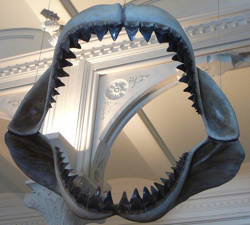 Model čelistí megalodona v Americkém muzeu přírodní historie v New Yorku.