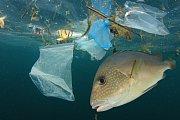 Plastový odpad ohrožuje mořské živočichy