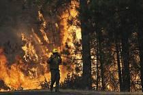 lesní požár, ilustrační foto