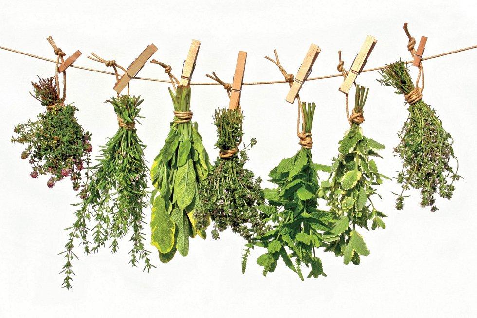 Celé nadzemní části rostlin sušíme zavěšené ve svazečcích na suchém, teplém astinném místě, dokud se nezačnou drobit.