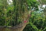 Canopy Walk (Ghana)