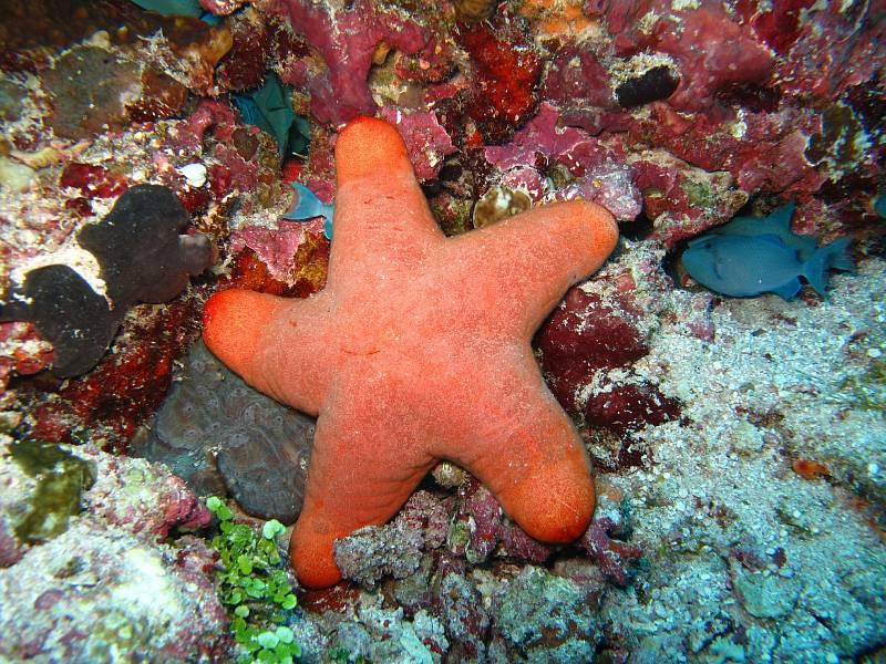 Korálové útesy se nacházejí vteplé vodě a pokrývají méně než jedno procento dna oceánu.