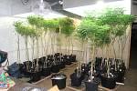 Pěstírna marihuany ve Vejprtech