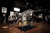 Kostra 150 milionů let starého masožravého ještěra allosaura, která se byla 13. října 2020 v Paříži vydražena za tři miliony eur.