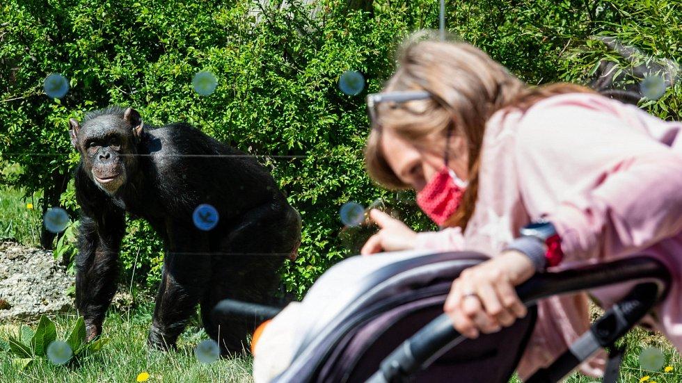 Velkým lákadlem v Královéhradeckém krají je zoo ve Dvoře Králové