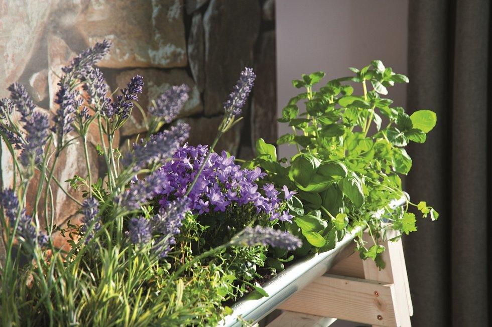 Při sesazování bylinek do jednoho truhlíku dávejte ksobě rostlinky se stejnými požadavky na zálivku.