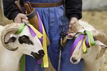 Opoziční Úsvit chce změnou zákona na ochranu zvířat proti týrání zamezit jen porážkám muslimským způsobem halal. Ilustrační foto.