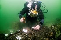 Dřevěná struktura z doby kamenné objevená u ostrůvku Wight