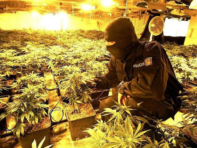 Policie odhalila v Kokoníně na Jablonecku obří pěstírnu marihuany. Na místě našli 700 rostlin téměř před sklizní, zadrženi byli dva Vietnamci.