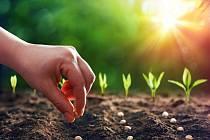 Už během dubna můžete na své záhony vysévat téměř všechny druhy zeleniny, ale i bylinky či letničky