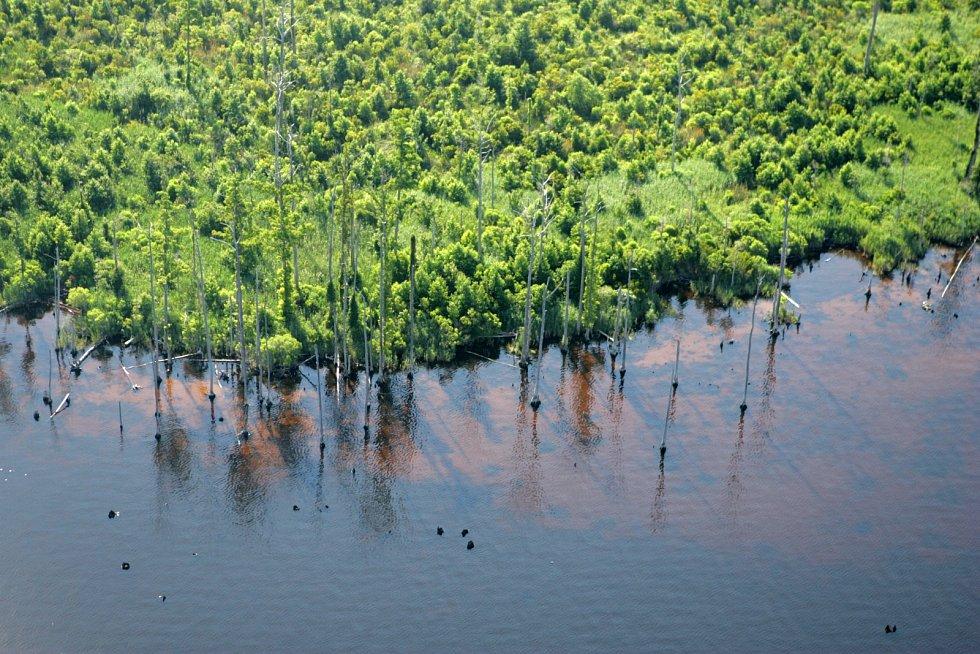 Mokřady v Alligator River National Wildlife Refuge.