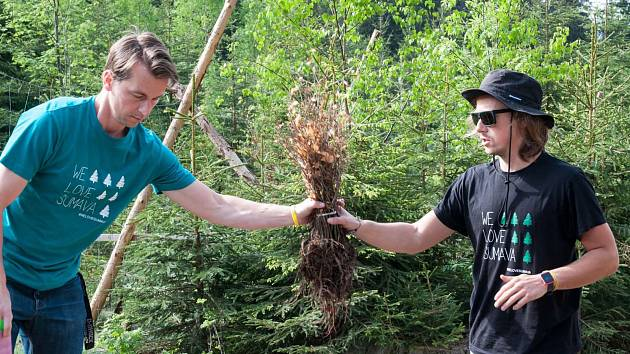 Filip a Richard Brožovi při sázení stromků na Šumavě