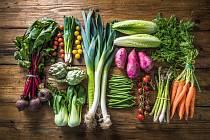 Zelenina - Ilustrační foto