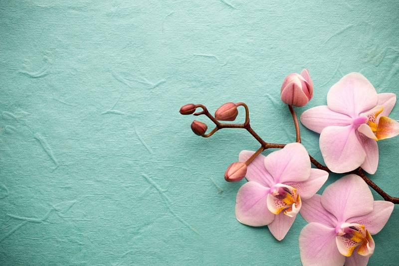 Orchidejí existuje přes 28 tisíc druhů a jsou rozšířené po celé planetě, nejvíce v tropech.