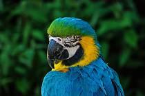 Papoušek. Ilustrační foto