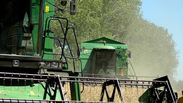 V zemi i přes velká vedra probíhají sklizně.