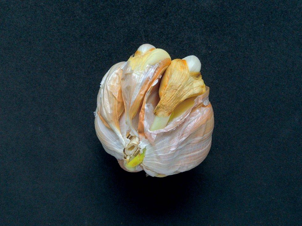 Napadení houbovými chorobami