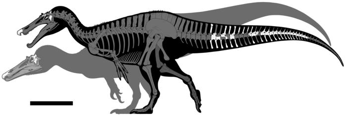 Siluety obou dinosaurů. Ceratosuchops inferodios v popředí, Riparovenator milnerae v pozadí