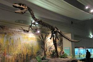 Kostra megalosaura v muzeu v britském Liverpoolu