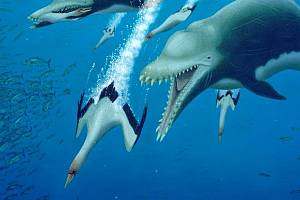 Umělecká představa útoku delfína Ankylorhiza tiedemani