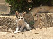 Pevnost v Rabatu je také místem, kde najdete kočky všech barev a nálad.
