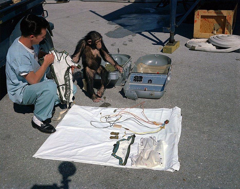 Technik připravuje šimpanze Hama ke startu