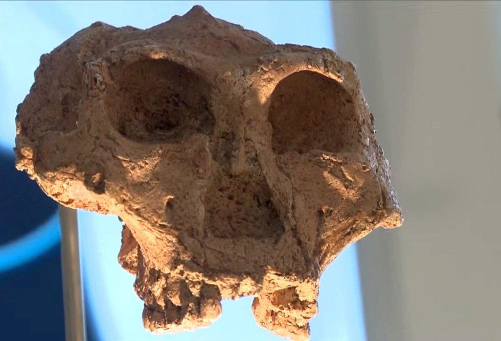 Zřejmě nejstarší lebeční fragment druhu Homo sapiens byl nalezen vedle lebky neandrtálce