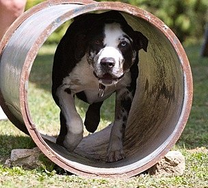 Záchranářští psi.
