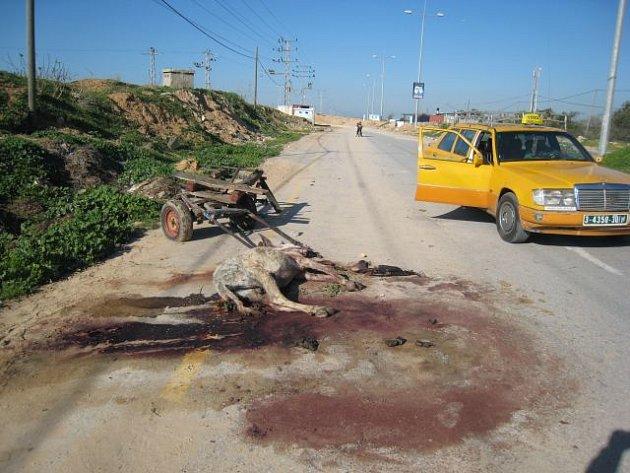 Mrtvý osel na silnici v pásmu Gazy po izraelském leteckém útoku v roce 2008.