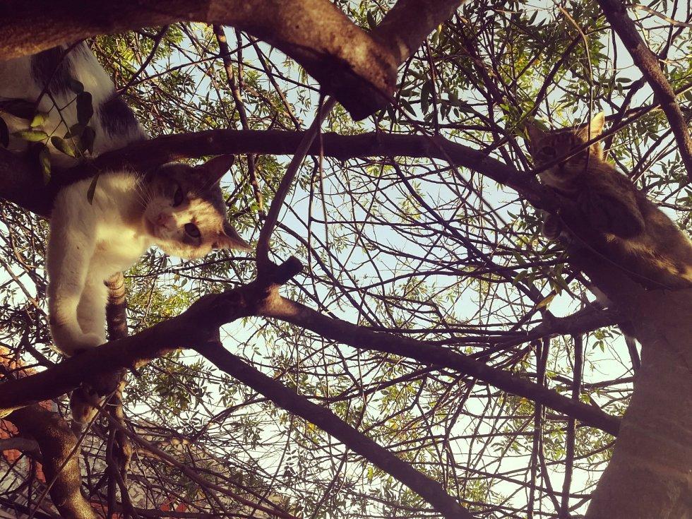 Kočky rostou na stromě...