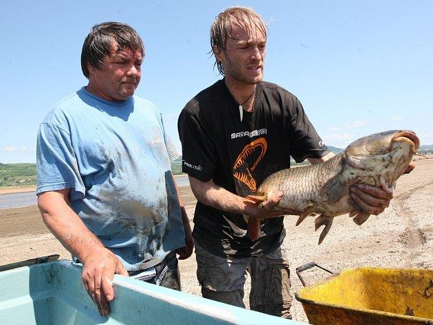 Rybář Jakub Vágner odklízí následky povodní na Litoměřicku.