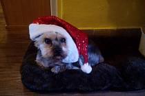 3. místo: Teddy už je připravený na Vánoce.