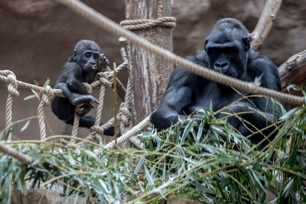 Oáza klidu. Zoologická zahrada hlavního města Prahy v Troji byla otevřena 28. září 1931. Snímky pocházejí z roku 2017