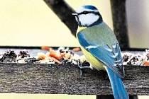 VE VOLNÉM PROSTORU. Ptáci, kteří krmítko navštíví, by měli mít přehled o tom, co se kolem nich děje.