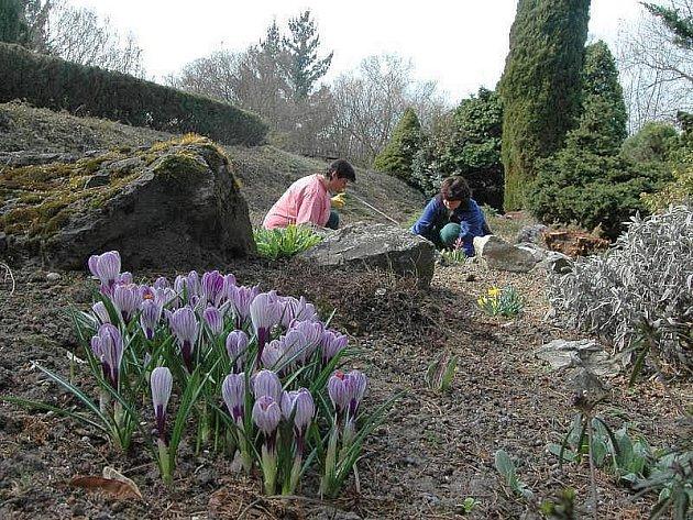 Nové expozice okrasných travin, dřevěné maxišachy či tisíce rozkvetlých krokusů. I taková lákadla nabízí Botanická zahrada výstaviště Flora v Olomouci, která ve čtvrtek 1. dubna otevírá své brány.