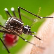 """Podle amerického Ústavu pro kontrolu a prevenci nemocí jsou komáři """"nejnebezpečnějším organismem na světě."""