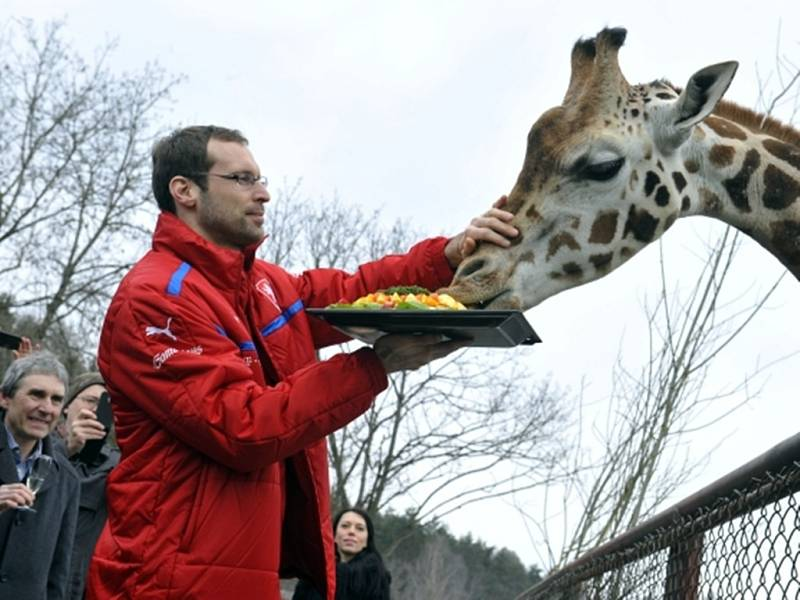 Petr Čech věnoval jménem fotbalového nároďáku Dinovi ovocnou dobrotu.