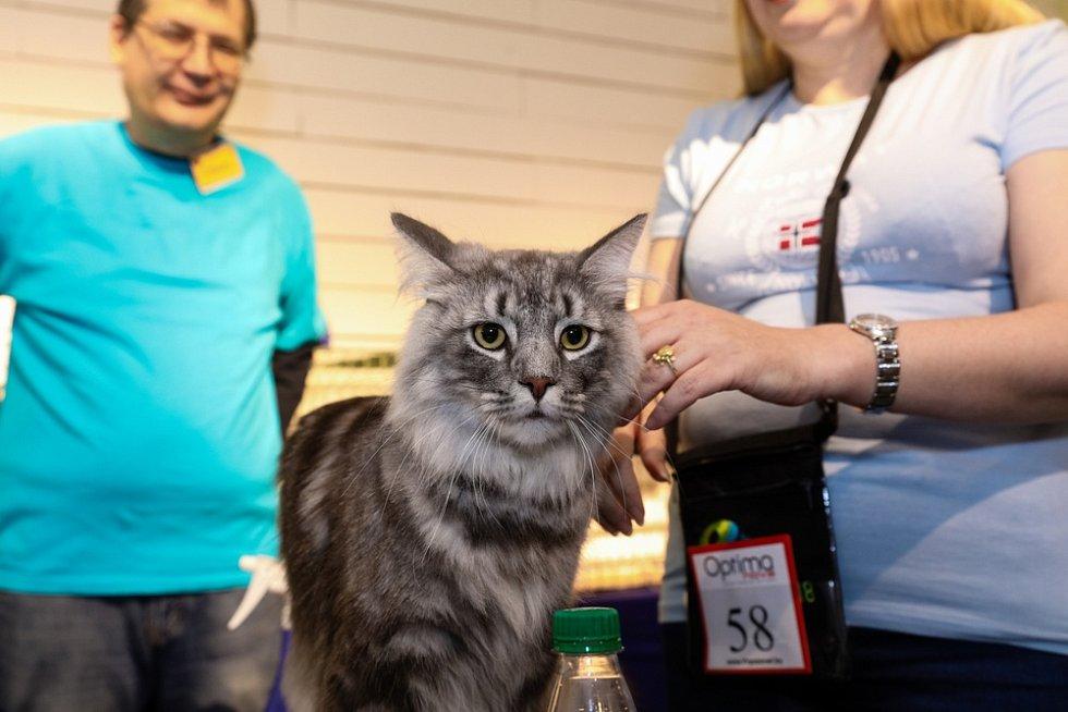Některá kočka je bezprostřední a je jí jedno, jestli je doma, nebo v cizím prostředí plném hluku a různých pachů.