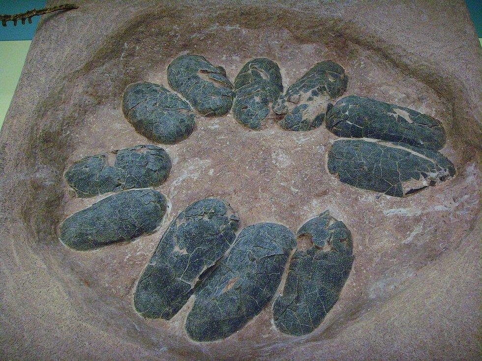 Oviraptoří snůška vajec, o která se tito teropodi starali