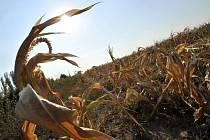 V Kamerunu mění kukuřičné klasy v ekologické uhlí. Ilustrační foto.